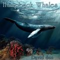 Relaxing Music: 'Humpback Whales' - Album Cover Image